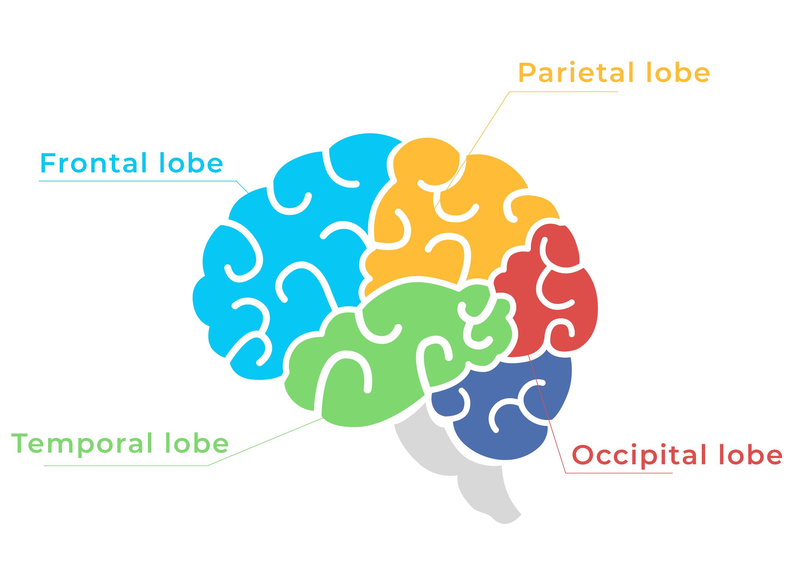 banyanpro-squeezing-brain